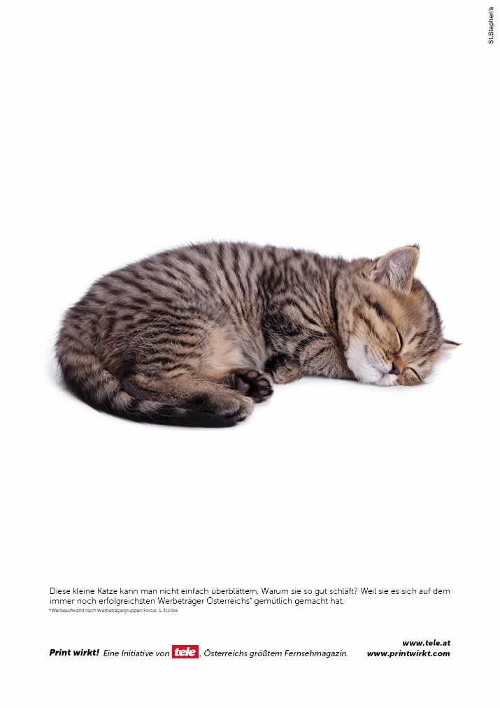 Schlafende kleine Katze