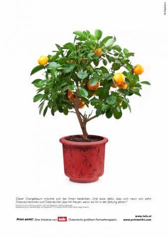 Ein Orangenbaum in einem Blumentopf