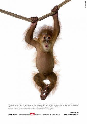Ein kleiner Schimpanse hängt an einem Seil